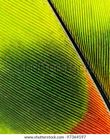feather of macaw close up