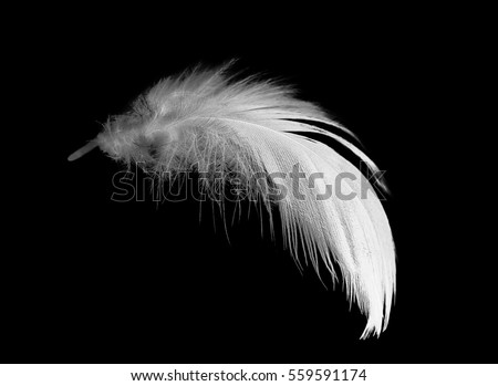 Shutterstock feather on black background