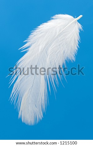 feather on blue background