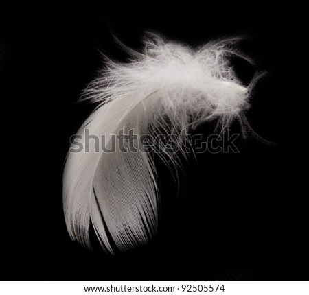 feather on the black background #92505574