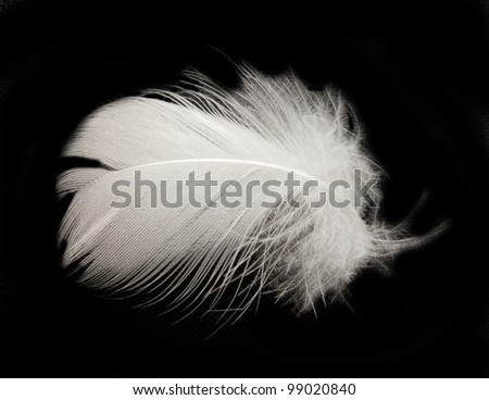 feather on the black background #99020840