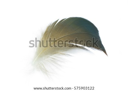 feather on white background #575903122
