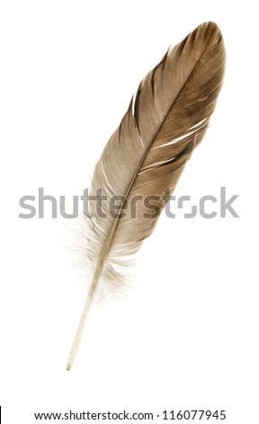 Feather pen. Isolated on a white background. #116077945