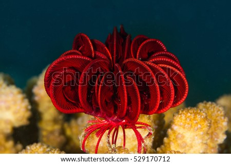 feather star #529170712