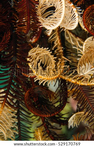 Feather star pattern #529170769
