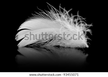 Feather. The bird's feather lies on a black background with reflexion #93455071