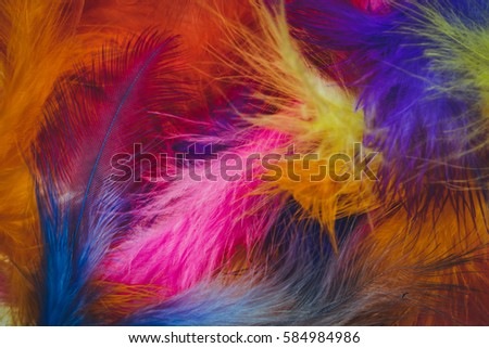Feathers #584984986