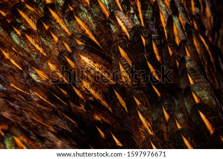 Feathers background ,Feather, Macrophotography, Extreme Close-Up, Abstract, Decoration,Pheasant feathers,Pheasant feathers,Feather, Pheasant - Bird, Extreme Close-Up, Macrophotography, Animal,Black