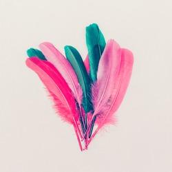 Feathers. Fashion photo. Minimal style