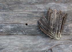 feathers of a bird on a wooden table