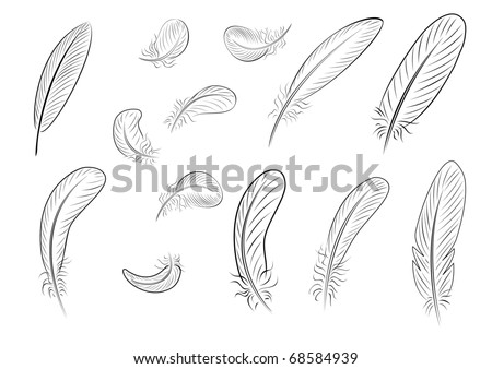 Feathers, painted with thin black lines