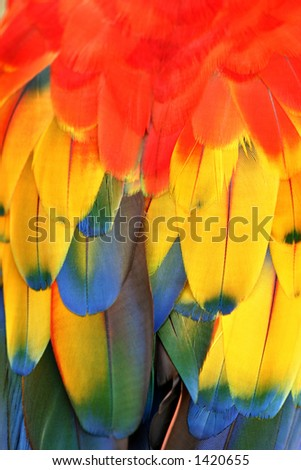 Feathers, parrots back - stock photo