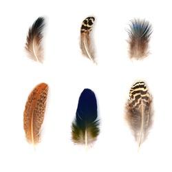 Feathers set isolated on white background