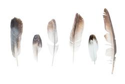 Feathers set isolated on white background.