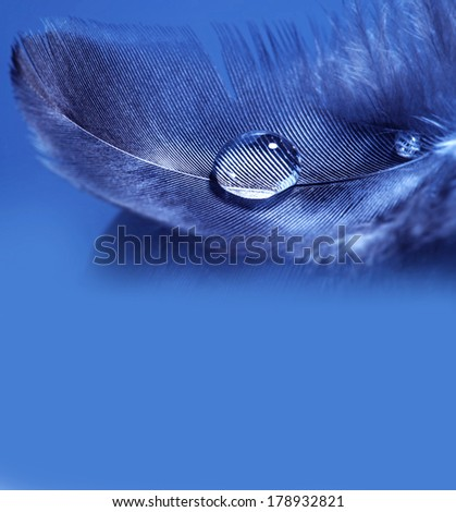 Stock Photo feathers with rain drop macro