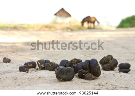 Feces of horses. Feces of horses eating grass on the ground. - stock photo