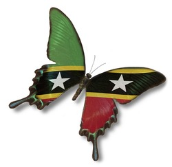 Federation of Saint Kitts and Nevis flag on butterfly isolated on white
