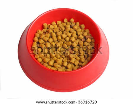 feed for cats in red dishware