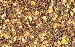 feed horse barley, apple, molasses etc