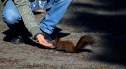Feeding a squirrel in the big park in Sofia, Bulgaria (Boris Garden Park)