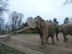 Feeding Elephant From Human Hand In The Nature Park. Grey And Blue Background.