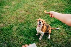 Feeding happy dog with treats.