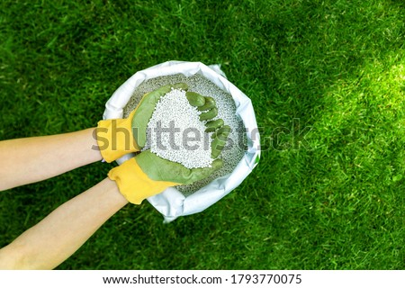 feeding lawn with granular fertilizer for perfect green grass Foto stock ©