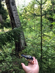 Feeding little bird from hand palm in the forest
