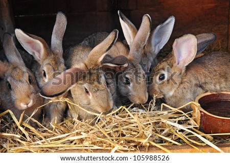 Feeding rabbits on animal farm in rabbit-hutch.