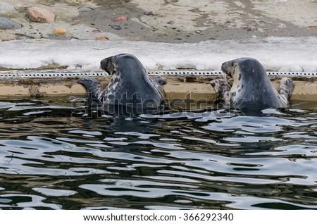 Photo of  feeding seals
