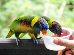 Feeding the colorful birds at Jurong bird park, Singapore.
