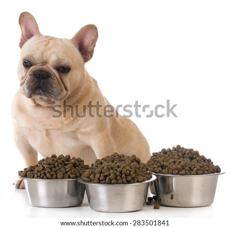 feeding the dog french bulldog sitting beside several bowls of dog food on white background