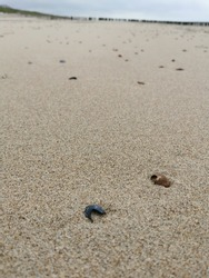 Feet buried in the sand and found many beautiful shells. What a successful trip to the beach.