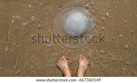 Feet of a person looking at Rhopilema nomadica jellyfish at the seaside. This kind of jellyfish has vermicular filaments with venomous stinging cells and can cause painful injuries to people.