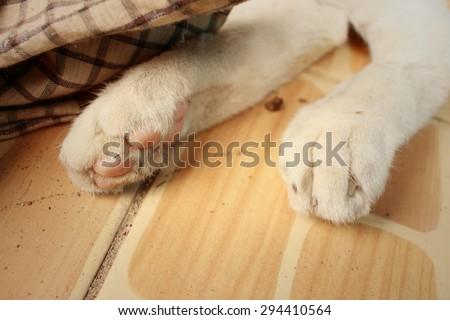 Feet of cat sleeps at the park. - Shutterstock ID 294410564