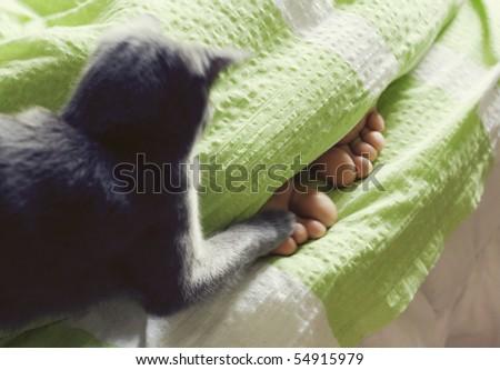 feet under blanket and cat cuddling