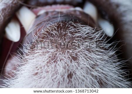 feline acne concept #1368713042