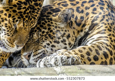 Shutterstock Feline's tenders