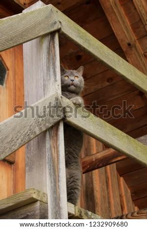 Felis catus, Breed cat, Domestic cat #1232909680