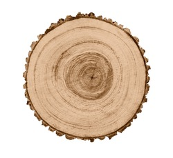 Felled piece of wood from a tree trunk with growth rings isolated on white.