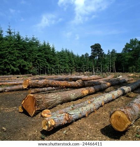 Felled trees in a forest