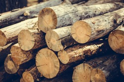 Felling a tree. Wooden logs from a pine forest, stacked in a forest. Forest of pine and spruce. Logging, logging, forest industry. Natural wood background. A pile of logs. Deforestation.