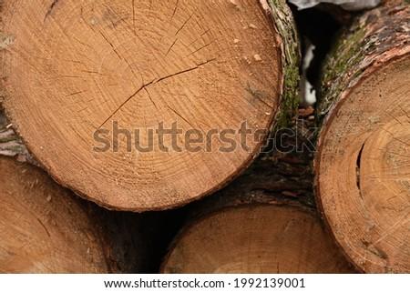 Fellings, pillars of felled trees Stock photo ©