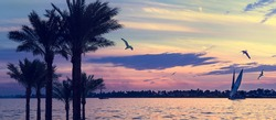 Felucca at sunset, romantic cruise or tour on the Nile river in Egypt. Calm landscape with silhouettes of palms tree, egyptian sailboats, beautiful cloudy sky and flyght birds, riverside view.