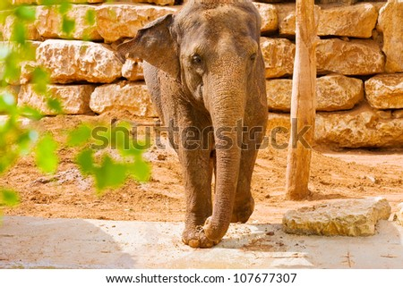 Female African elephant standing near a brick wall. - stock photo