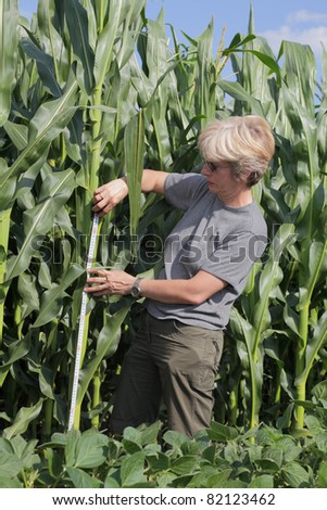 Female agricultural expert inspecting quality of corn