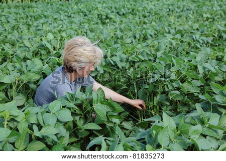Female agricultural expert inspecting quality of soy