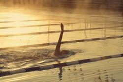Female backstroke swimmer in outdoor pool early morning