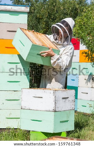 Female beekeeper carrying honeycomb crate while working at apiary