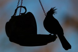 Female Cardinal Silhouette Perched on a Teacup Bird Feeder